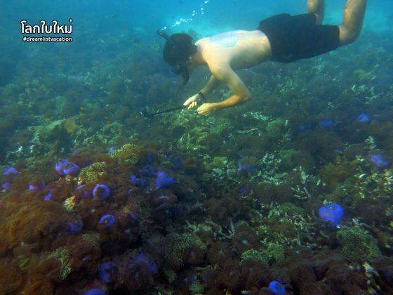 เกาะนาวโอพี ประเทศพม่า